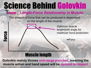Golovkin-Length-tension